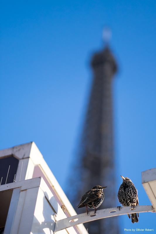Les gardiens de la Tour Eiffel